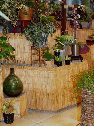 plantes d 39 int rieur. Black Bedroom Furniture Sets. Home Design Ideas